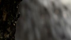 高清实拍瀑布边缘大树上的甲虫