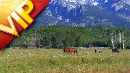 雪山下两匹马在草地上吃草高清特写