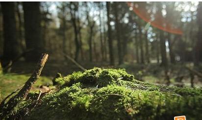 森林苔藓阳光视频素材森林 高清实拍素材 Forest