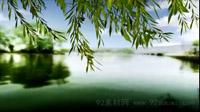 浪漫春风又绿柳树河岸 超长时长柳树树枝随风摆动 舞台视频素材