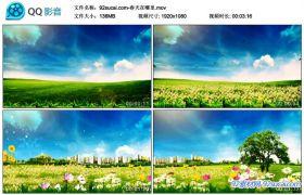 春天在哪里唯美的风景 映射北京城市名胜大自然春意盎然背景视频