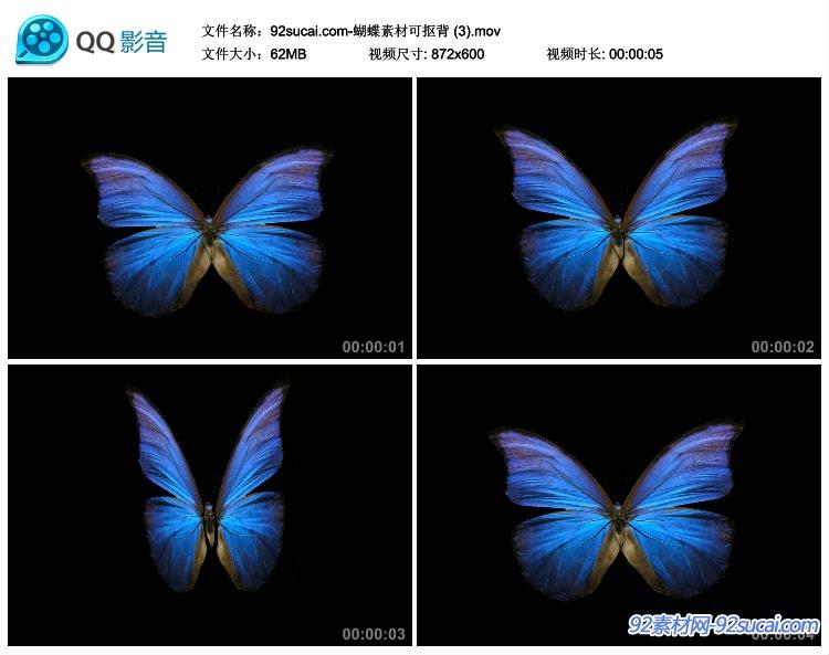 6组多彩蝴蝶飞舞婚庆装饰修饰前景素材 可抠背景带通道视频素材