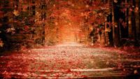 深秋红色枫树林 枫叶飘满地 枫叶飘落 高清动态视频素材