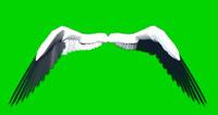 婚慶通用視頻素材 天使翅膀 帶綠色通道可摳背景