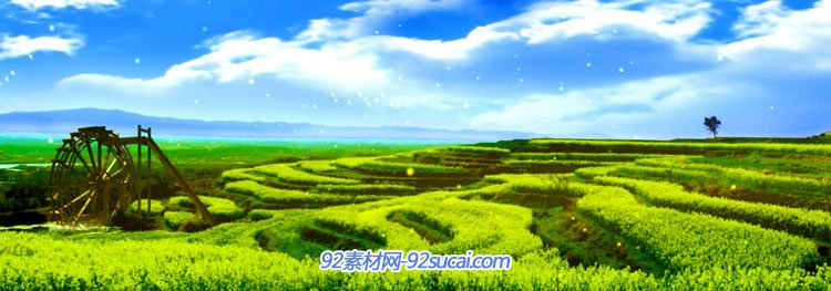 唯美丰收农田麦田向日葵花海在希望的田野上歌曲舞台背景动态视频