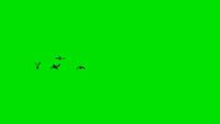 一群鸟由远而近动画 带绿色通道可抠背景动态视频