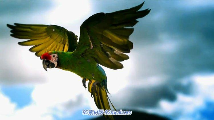 鹦鹉飞翔美丽自然风光墨西哥自然独立音乐纪录片Esto es Mexico-8