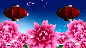 蓝天白云牡丹花开红灯笼 花瓣飘舞舞台背景视频素材