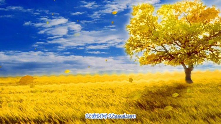 金色秋天的田野大树丰收的季节蓝天白云舞台背景动态视频素材