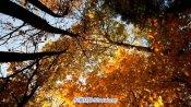 Autumn Skies秋日枫叶的星空阳光透过枫树林延时拍照高清实拍景色