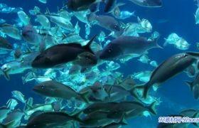 陆地游鱼 海里一大群的小鱼游来游去 鱼群游动动画静态视频素材