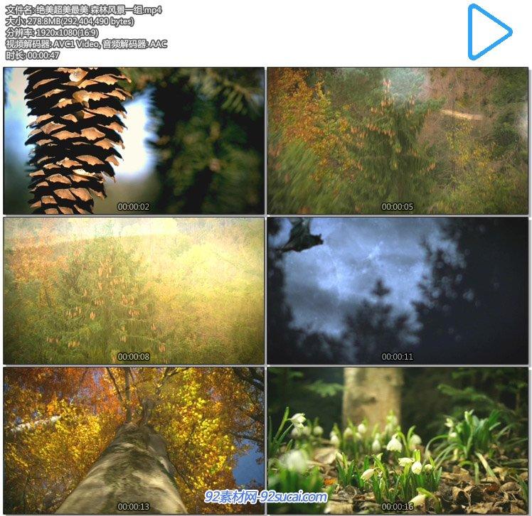 超唯美大自然森林风光风景 小动物蘑菇花苗生长树林高清实拍素材