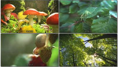 超唯美大天然丛林风景景色 小植物蘑菇花苗生长树林高清实拍素材