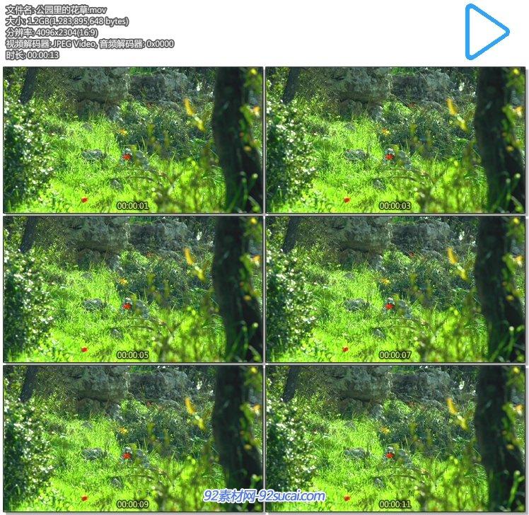 公园里一角的花花草草 美丽大自然风光风景4k超高清实拍视频素材