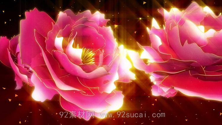 壮丽大气珍贵大朵牡丹花开绽放LED大屏幕舞台配景静态视频素材