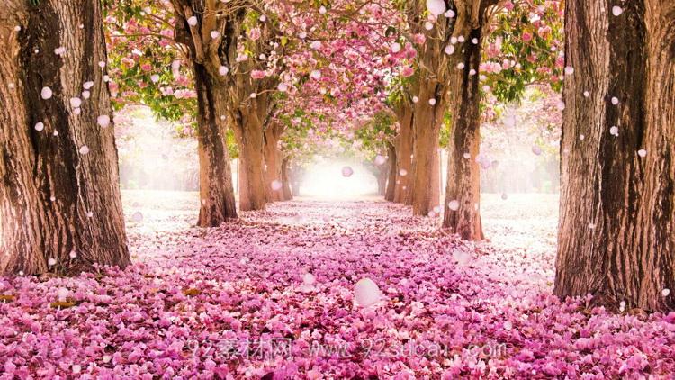 唯美梦幻浪漫的粉色桃花林 花瓣飘落LED舞台背景动态视频素材
