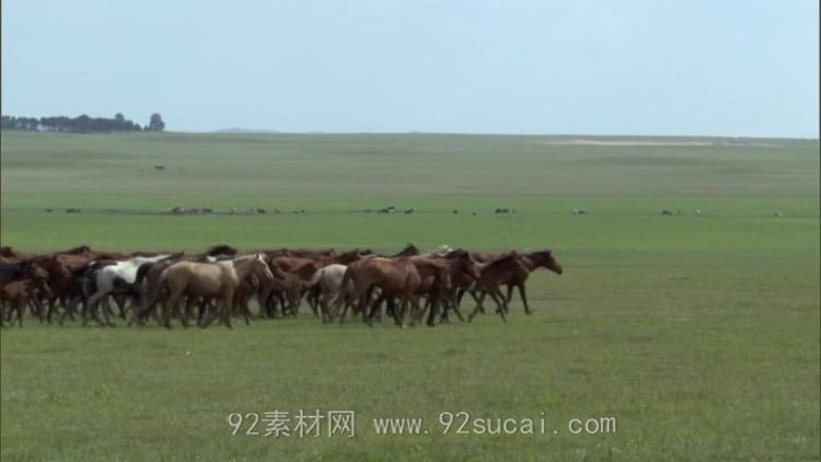 在辽阔的草原上骑马 马群奔跑骑马奔跑 高清实拍视频素材免费下载