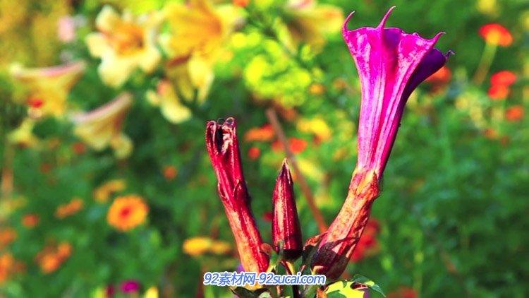 梦幻的莫奈秘密花园 庄园自然植物鲜花风光美景 高清实拍视频素材