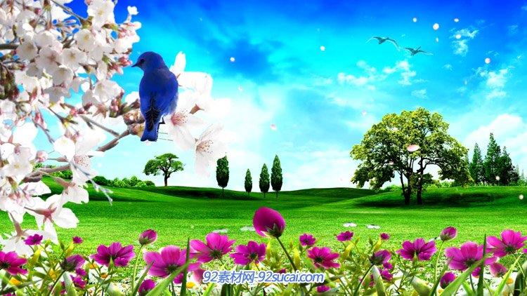 鸟儿花朵自然风光美景 绿色草地大树蓝天LED舞台背景动态视频素材