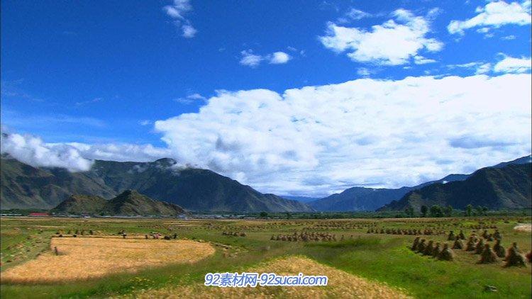 蓝天白云农妇在稻田里割草高原稻田收割完的美丽风光高清寮拍视频