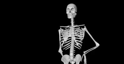 C4D绑定骨架透视骨骼人体受伤分解教程含工程文件 人体骨骼模子