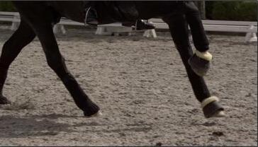 马的特写 骑马奔跑中的马蹄特写远观草地上的马吃草特写高清实拍