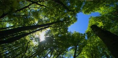 高清实拍视频素材 动物植物昆虫森林 大自然片花 大自然风景