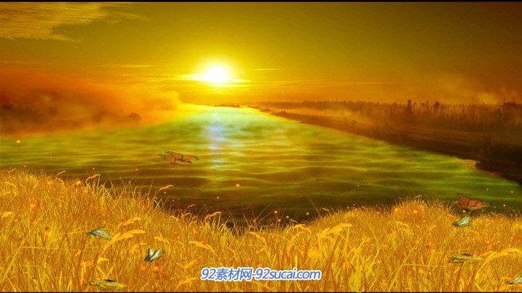 金黄色日落夕阳的自然风光美景蝴蝶飞舞 LED舞台背景动态视频素材