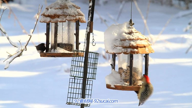 寒冷的冬天厚厚的积雪鸟儿喂食器上小鸟进食高清实拍视频素材
