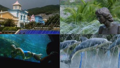 深圳水族馆水上世界海洋馆水中表演 水下婚礼海里游鱼高清实拍