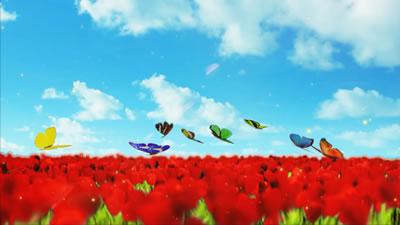 视频素材 唯美红花从上蝴蝶飞舞歌舞晚会舞台背景展示