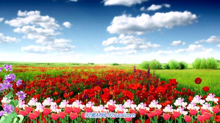 春天美丽的花海 蓝天白云花的海洋蝴蝶群飞 LED舞台背景动态视频