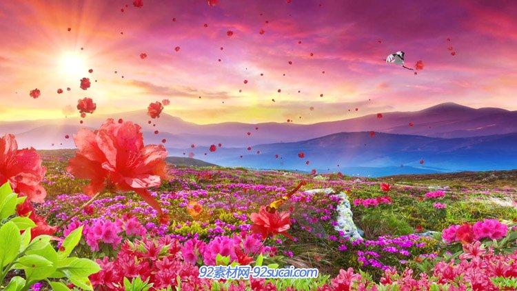满山映山红仙鹤飞过 中国红歌革命歌曲高清舞台背景动态视频素材