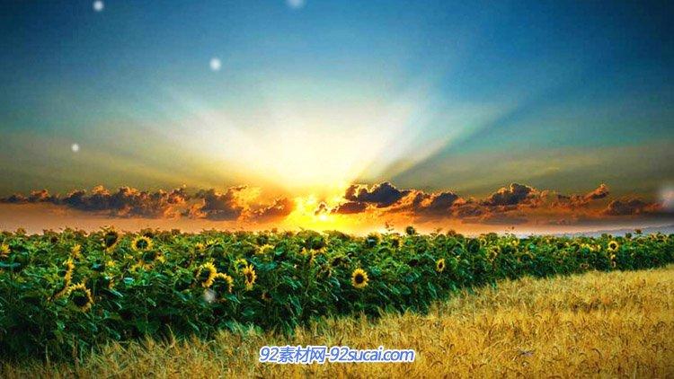 向日葵花园阳光自然风光场景 高清舞台背景动态视频素材