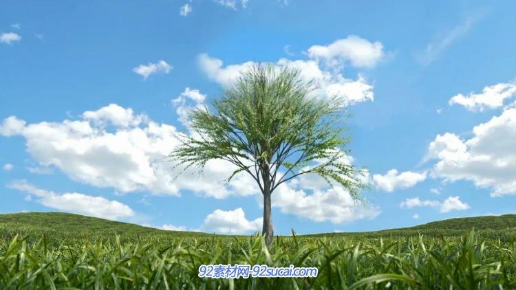 唯美大树发芽快速生长 草地绿树蓝天白云动态背景视频