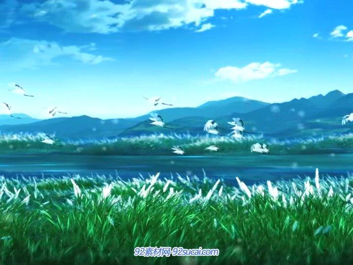 一群大雁飞过芦苇花丛 灯笼蒲公英飞舞 LED舞台背景动态视频