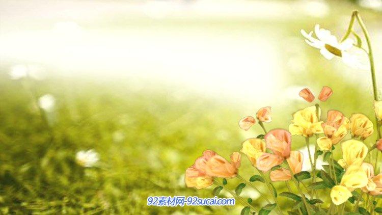 阳光明媚的郊外路边小朵野花齐放 唯美舞台背景动态视频素材