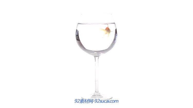 杯中的小鱼游来游去 高清实拍视频