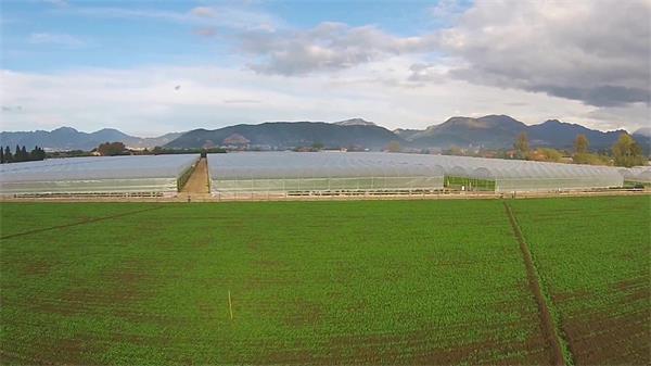 国外大棚农业种植收割蔬菜 配送包装流水线高清实拍