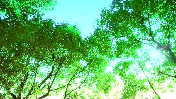 仰视阳光透射出的光线穿过树林 阳光射穿树林视频动态素材
