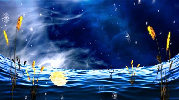 梦境优雅意境海面水母粒子星空婚礼 海面婚礼配景视频素材