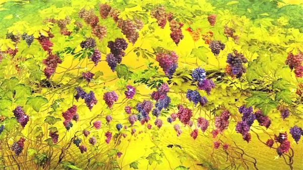 秋天橘黄色背景果实丰收葡萄挂满屏幕 葡萄藤视频素材