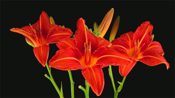 唯美多种花朵绚丽绽放种植破土而出 植物延时高清拍摄