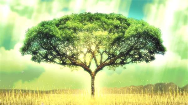 华美梦境繁盛大树配景蓝天白云飘浮花瓣视频素材