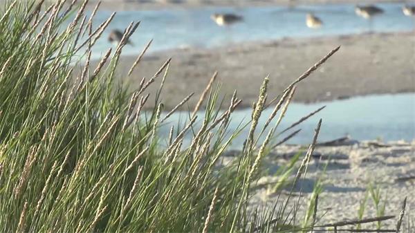 阳光活力岸边小草自然景色风吹植物高清视频实拍