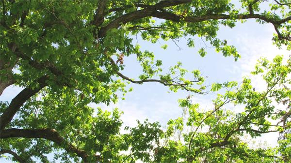 美轮美奂森林树木间隙仰视天空自然风景高清实拍