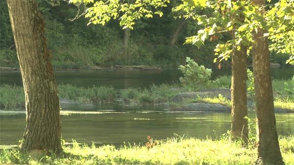 阳光照耀小河流动树叶轻飘延时实拍高清视频素材