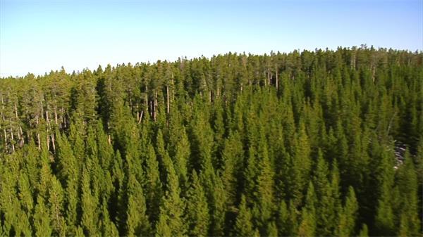 茂密大山參天大樹森林高空實拍航拍高清視頻素材