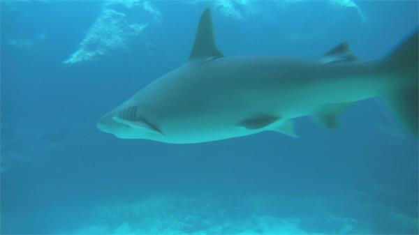 海洋公园鲨鱼游泳区海底世界景色高清视频实拍