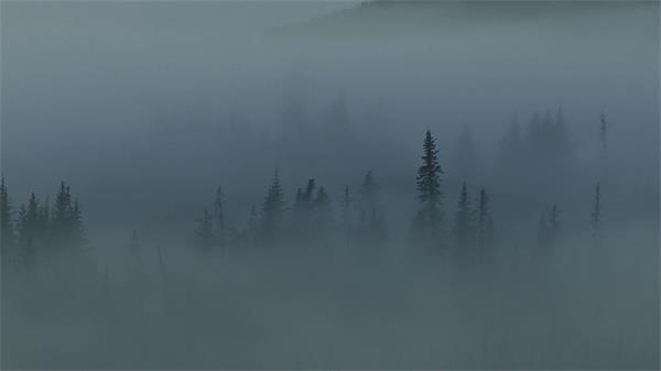 大雾天气朦胧森林实拍高清视频素材